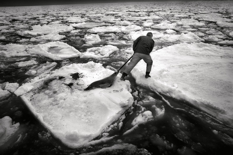 Yoanis Menge, Îles de la Madeleine, Québec, 2013. De la série / from the series HAKAPIK, 2012-2015. 35 épreuves argentiques / 35 gelatin silver prints, 60 × 91 cm ou/or 60 × 163 cm.
