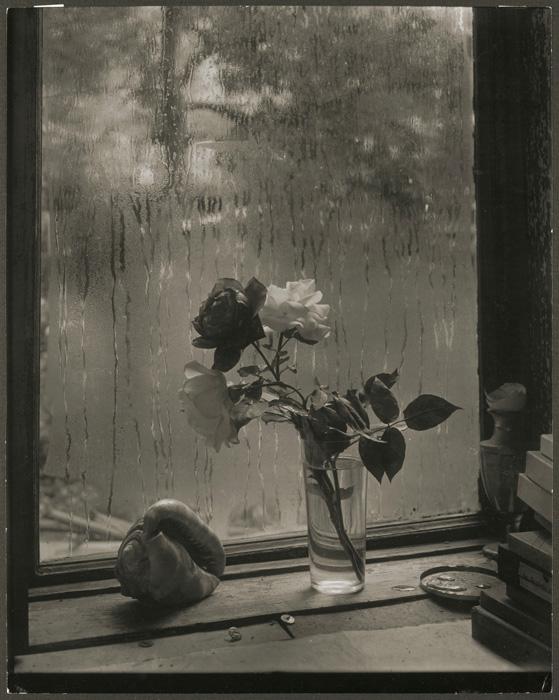 Josef Sudek, La dernière rose / Last Rose, 1956, épreuve argentique / silver print 28×23cm. Musée des beaux-arts du Canada / National Gallery of Canada, Ottawa. Photo : MBAC / NGC don anonyme / anonymous donor, 2010 © Succession / Estate Josef Sudek