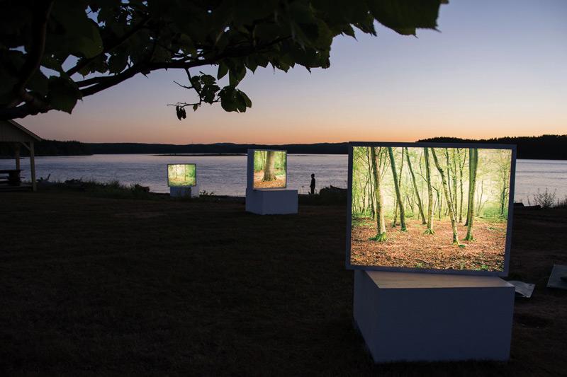 Jessica Auer, It's The Tree That Hides The Forest, vue partielle de l'installation en plein air, Chandler, 2017. Photo : Robert Dubé, Rencontres internationales de la photographie en Gaspésie