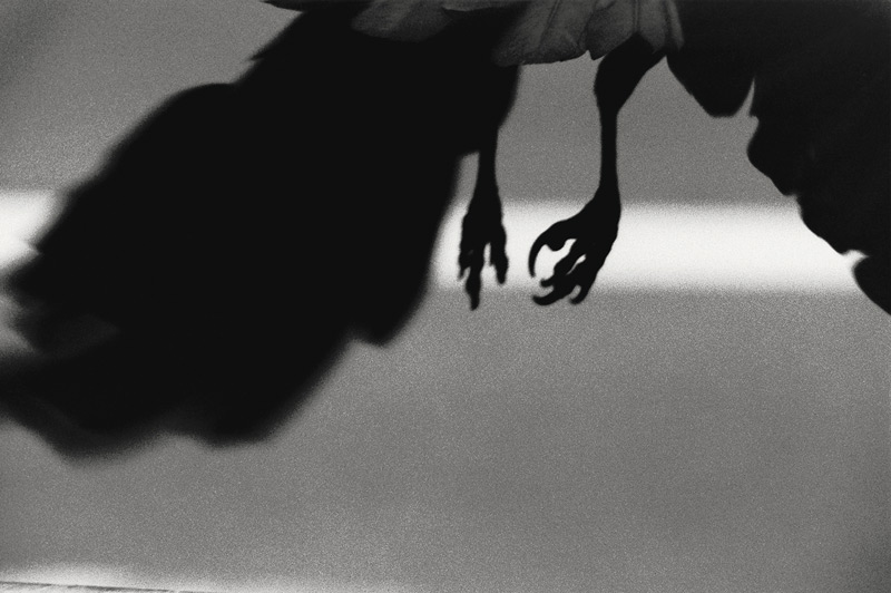 Masahisa Fukase, Ravens, Mack Books, Londres, 2017 (réédition), 148 pages, 100 photographies
