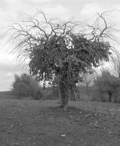 Masako Miyazaki, 木 - A tree - John K. Grande