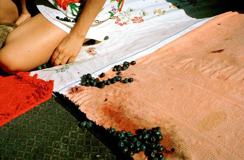 Jacynthe Carrier, Fruits de la suite faire le jour, impression jet d'encre,20'' x 30 '', 2017