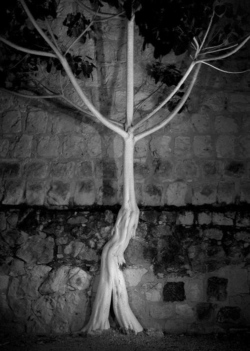 Linda Rutenberg, Ma Tree Skeleton, 2018.