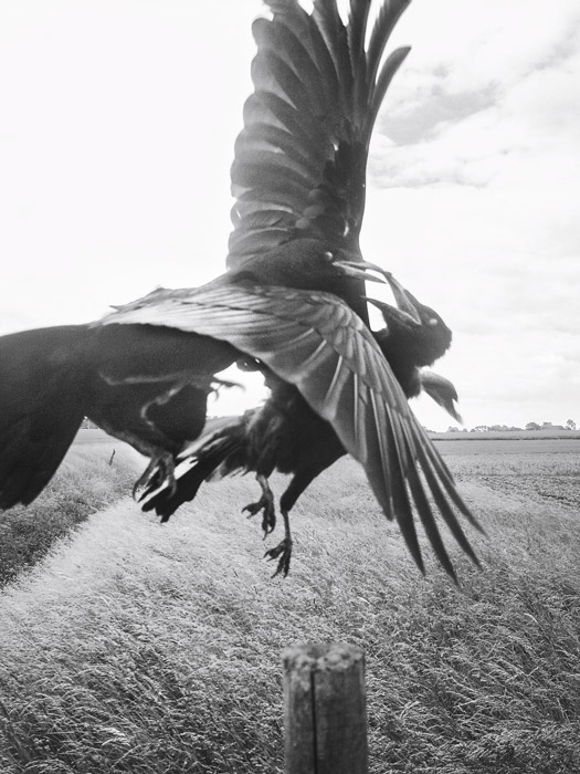 Stephen Gill, The Pillar, 2019, 31 épreuves couleur / colour prints, 96 épreuves argentiques / silver prints, texte de / text by Karl Ove Knausgard, 224 pages, 22 × 27 cm, Nobody Books
